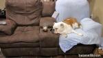 "Savannah's spot in ""her"" recliner."
