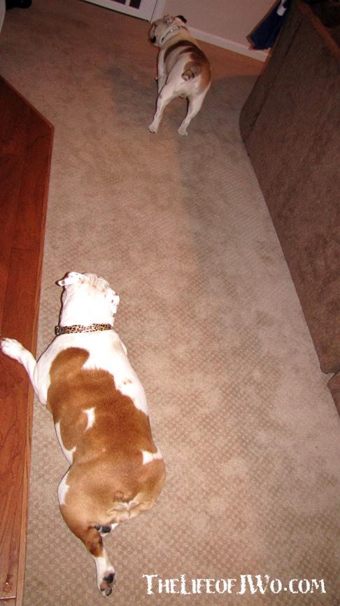 Savannah keeping her eye on Codis.