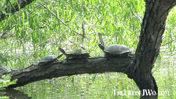Turtles-on-a-branch